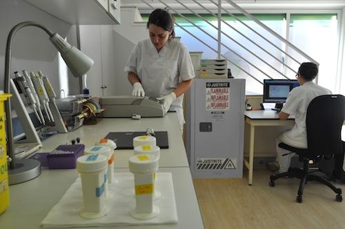 laboratorio_genetica3