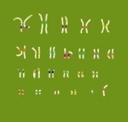 Todos los cromosomas