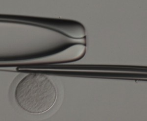 biopsia-corpusculo-polar-4