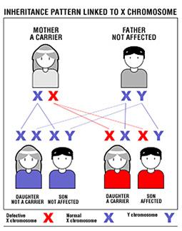 en_herencia_cromosoma_x_mad