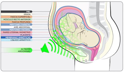 D couverte sur la stimulation f tale avec de la musique for L interieur du vagin